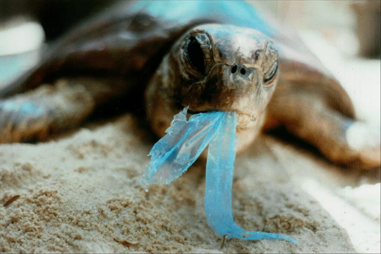 Image result for Marine wildlife in plastic