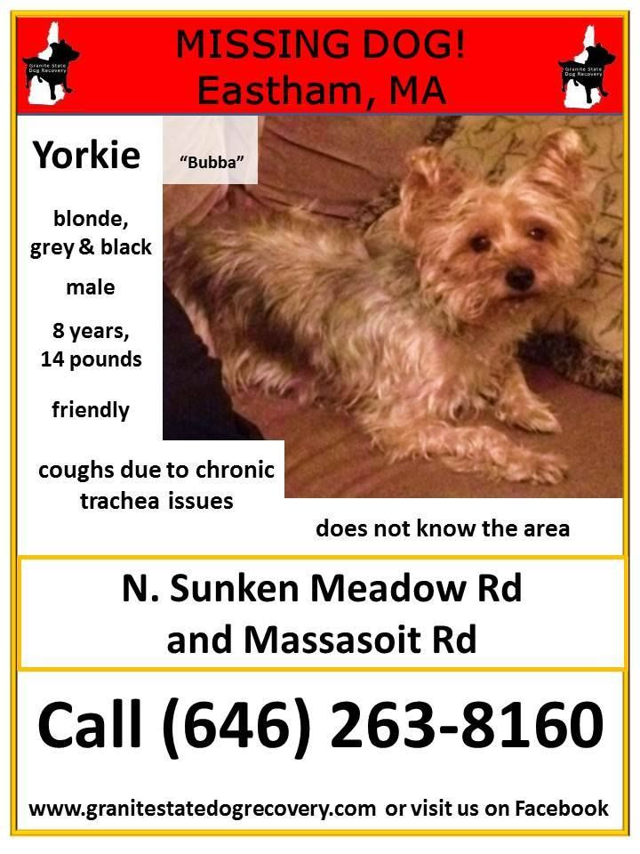"""Missing in Eastham MA """"Bubba"""" is a male Yorkshire"""