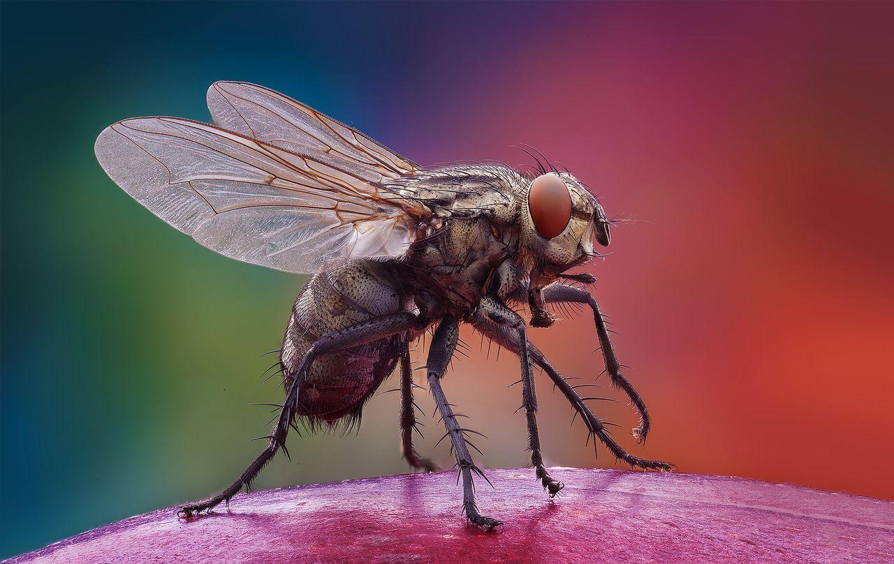 Прощения, классные картинки мух