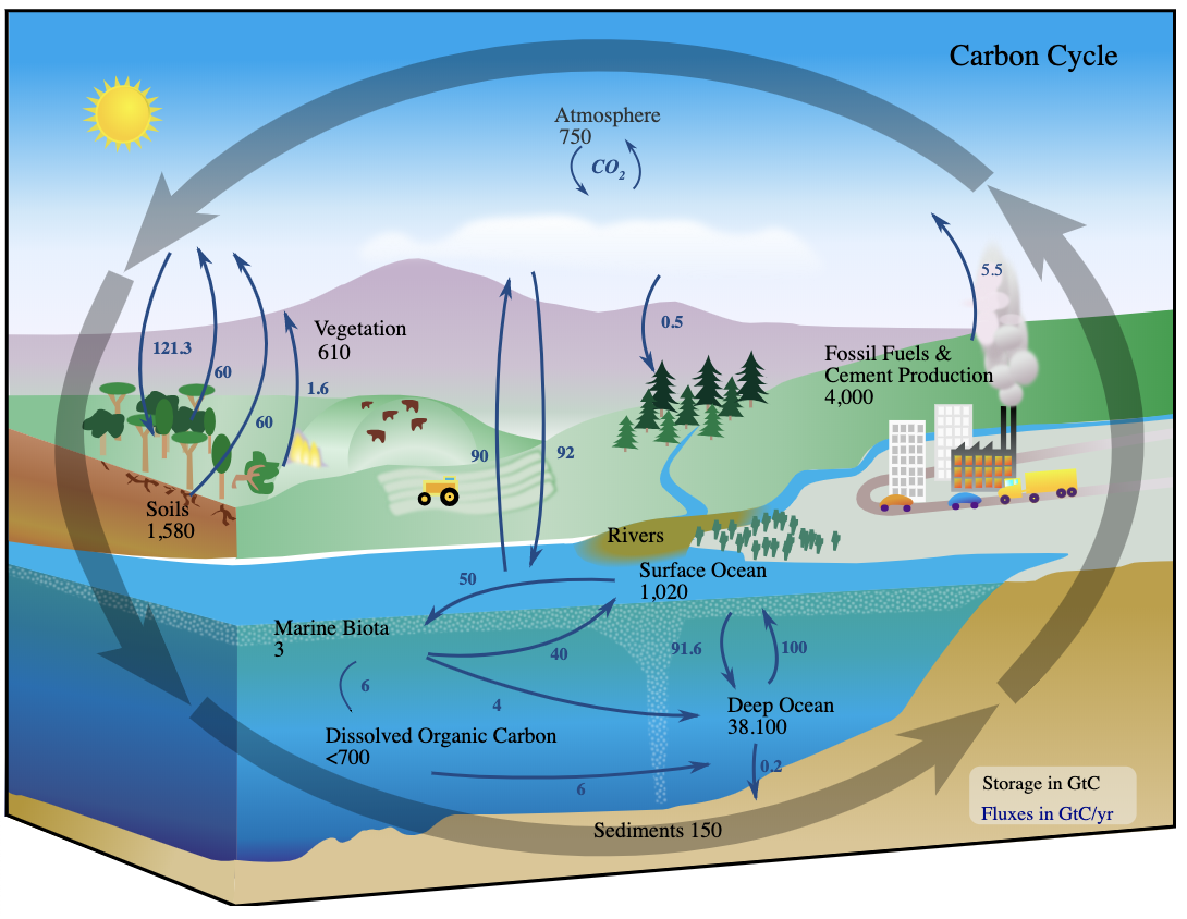 With Increasing Co2 Levels Ocean Microbes Are Affected In