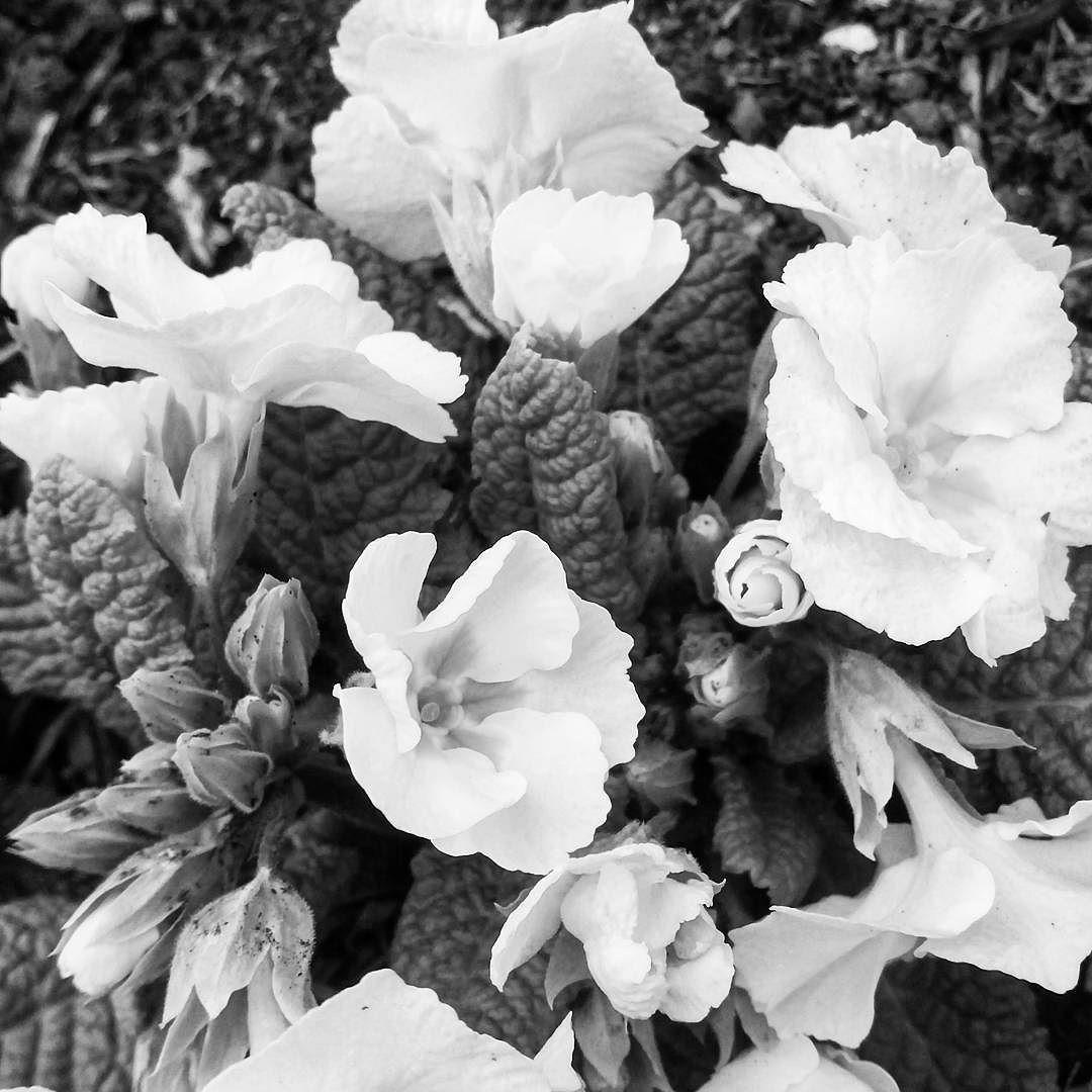 Muss nicht immer bunt sein  #nature #naturelovers  #nature_perfection #blackandwhite #naturelover #naturephotography #blackandwhitephotography #natureaddict  #blackandwhitephoto #natureporn  #flowerlover #nature_seekers  #flowerstagram #natureonly  #natureshots  #schwarzweissfotografie #schwarzweissbild #nature_obsession  #naturewalk  #naturesbeauty  #schwarzweiss #blumen #naturelove  #nature_up_close  #blume  #blüten #frühling #nature_of_our_world  #PictureoftheDay  #Photooftheday by…