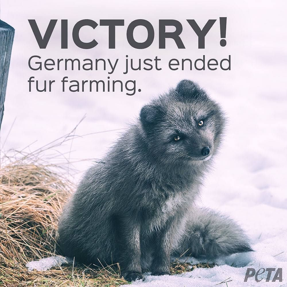 Animal Electrocuted Porn victory: germany's last fur farm calls it quits | animal
