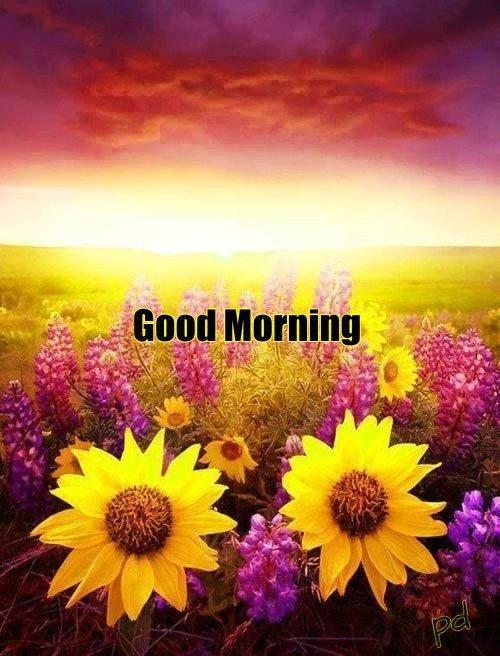 Good Morning Greetings Beautiful Nature Nature Scenery
