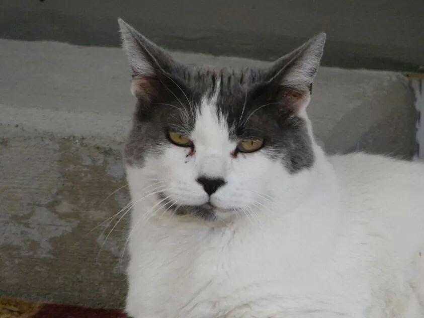 Gorgeous cat! Amazing spirit!