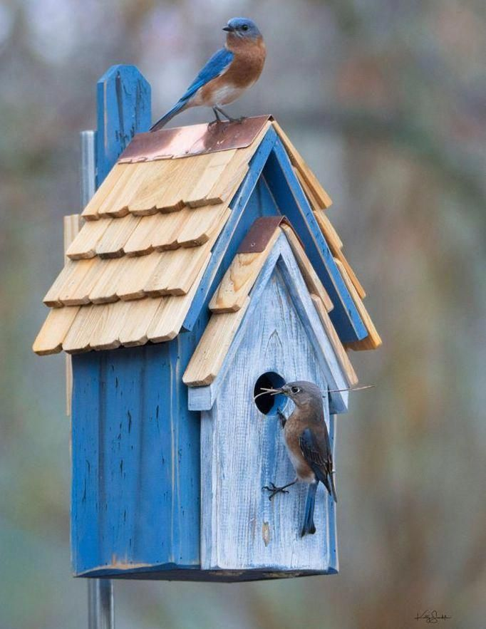 Rustic Bluebird Manor 3 Colors #birdhouses