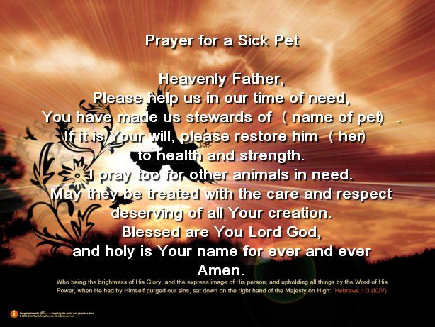 prayer for pet healing | Doggie Days | Prayers for healing