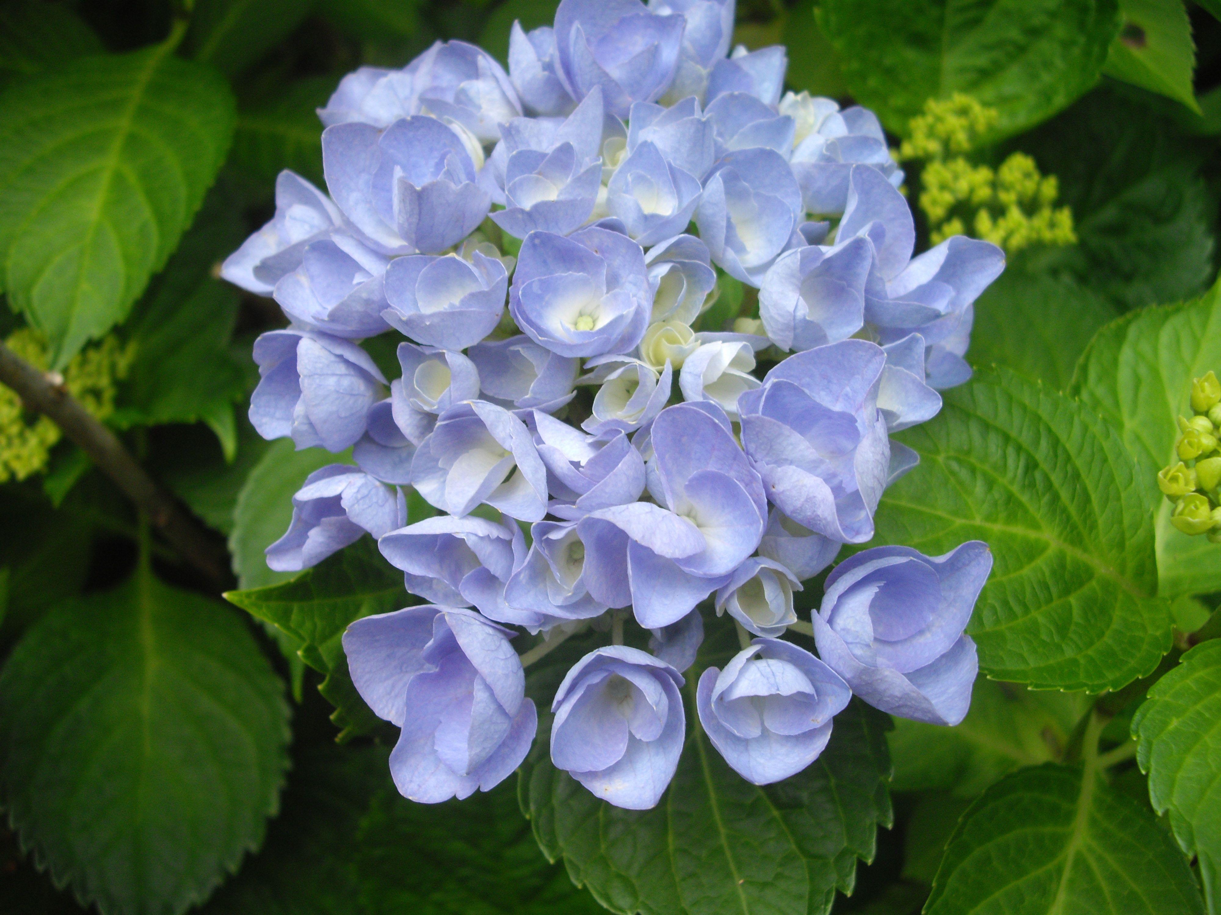 Home garden design flower  Hydrangea  Winter Wedding Flower  handcraftusa  Welcome to my