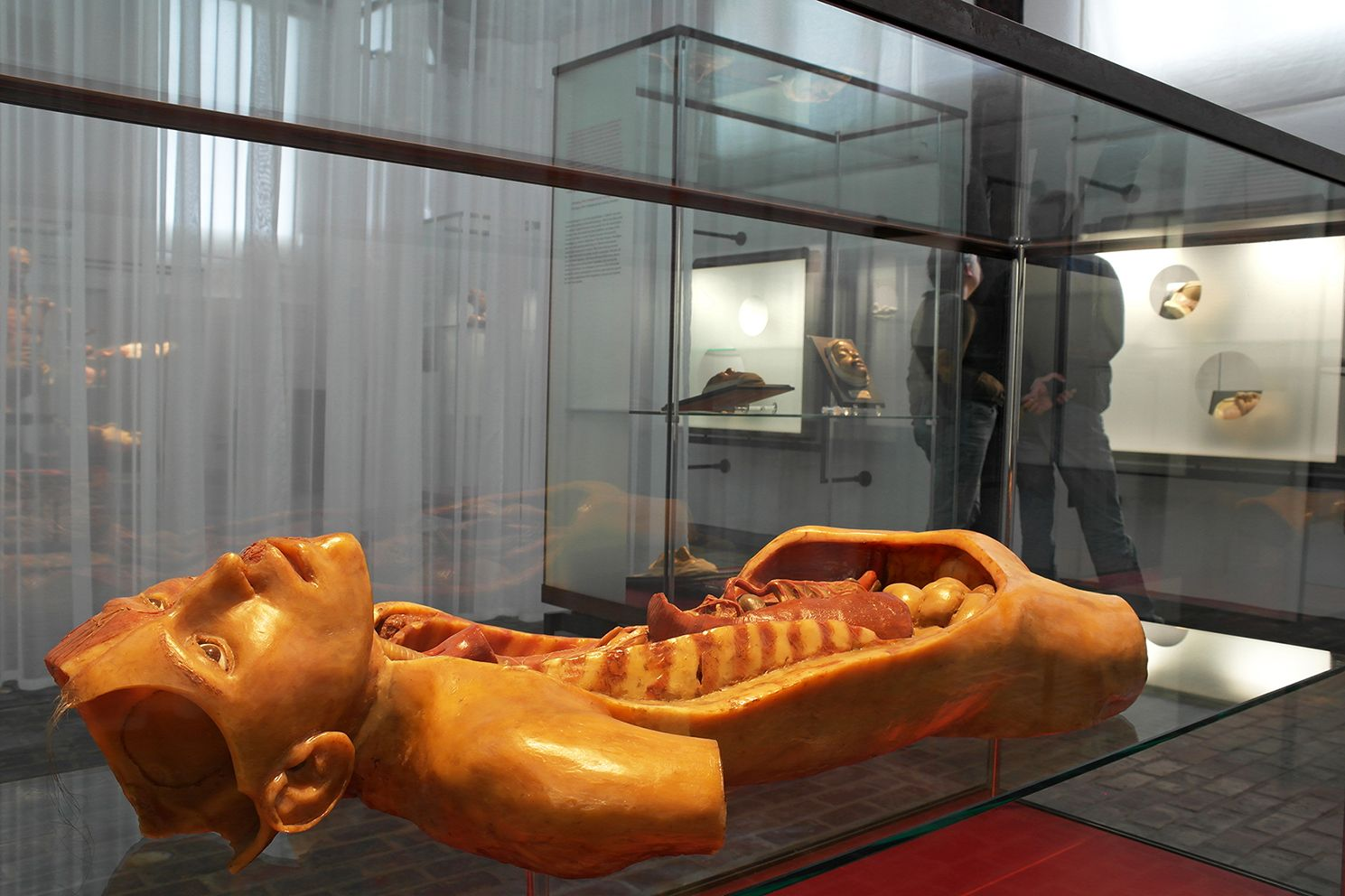 Tentoonstelling/exhibition 'Amazing Models', Museum Boerhaave, over anatomische modellen/anatomical models.