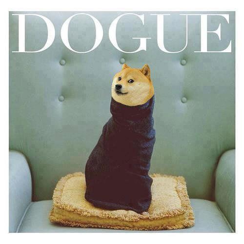 Dogue Shibe