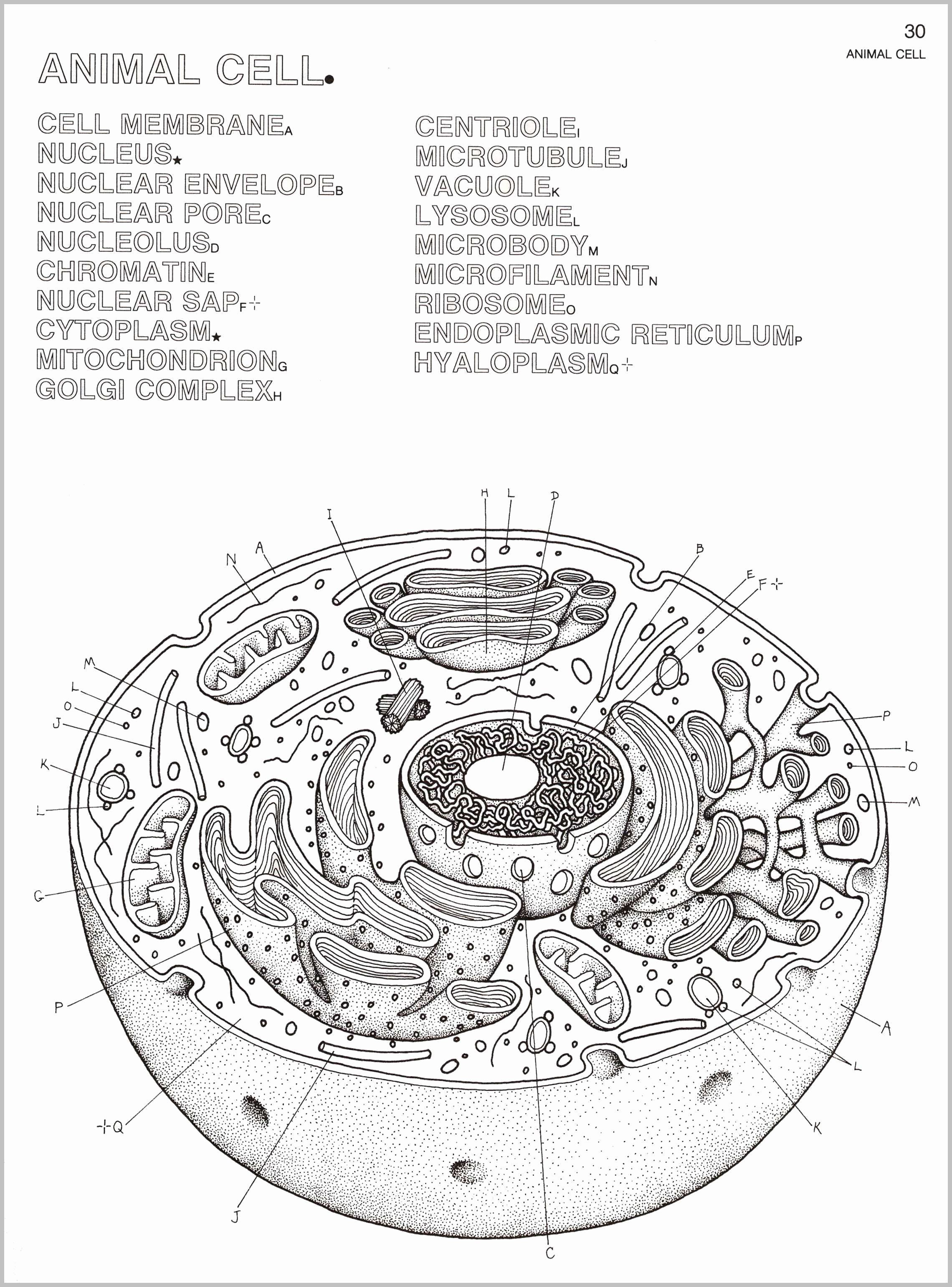 Coloring Book Sport Cars Em 2020 Celula Animal Sistema