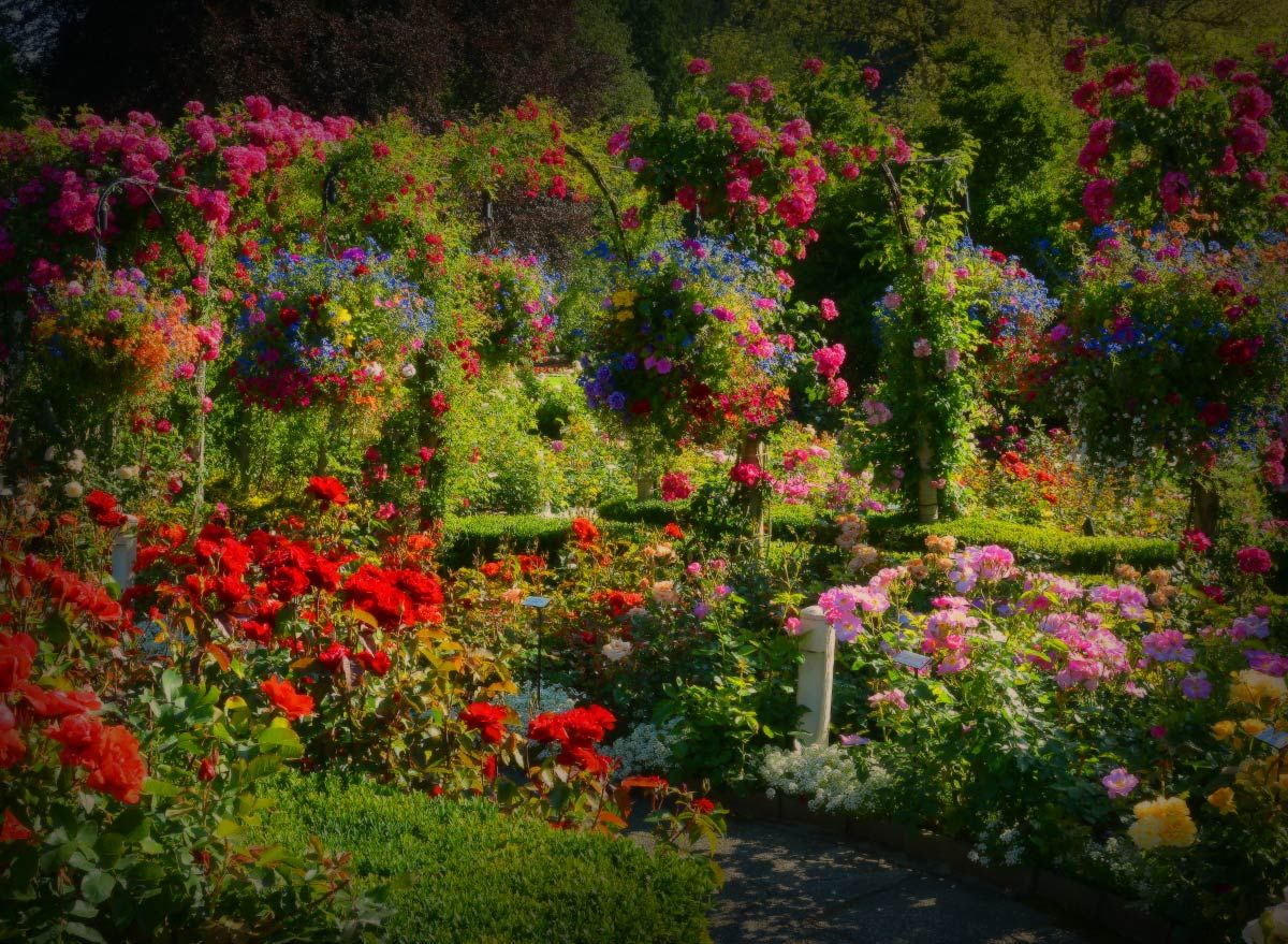 The Butchart Gardens is one of the top tourist attractions in ...