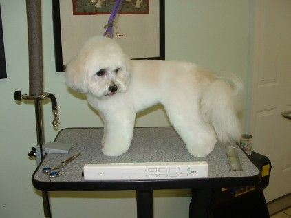 Coton De Tulear Grooming Coton De Tulear Dog Gifts Dog Lover Gifts
