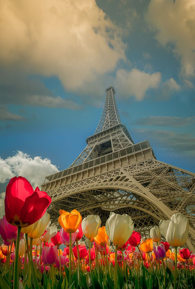 Paris Tulips by Alexander Hill on 500px