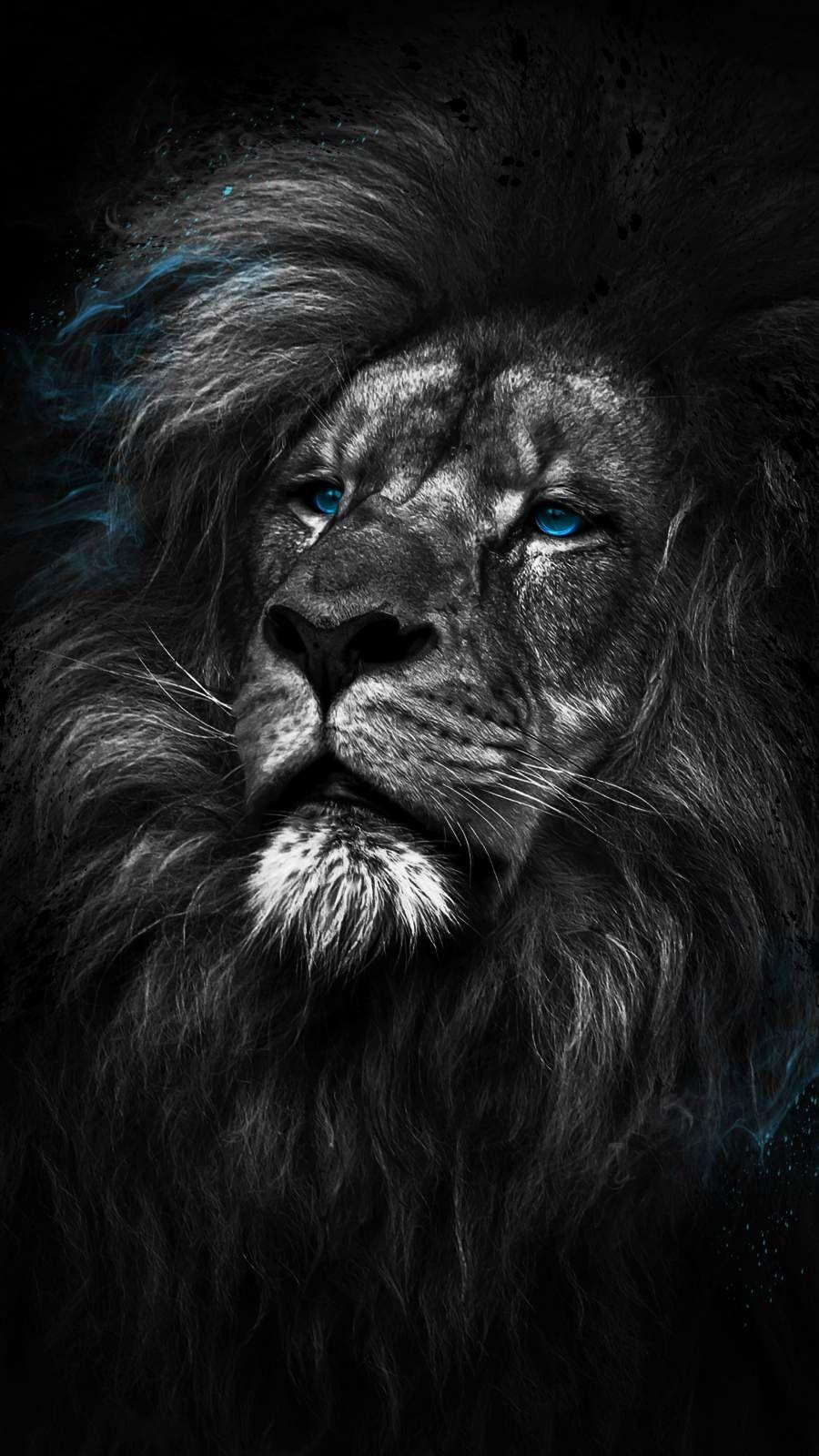 King Of The Jungle Iphone Wallpaper Lion Hd Wallpaper Lion Wallpaper Iphone Lion Wallpaper Iphone full hd black lion wallpaper