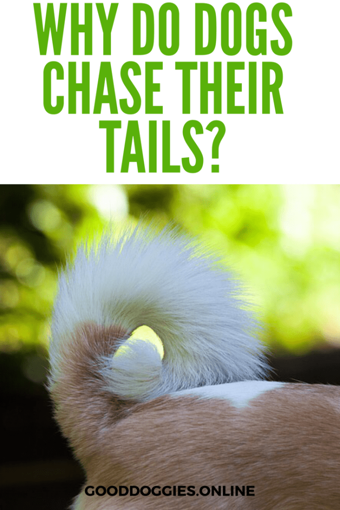 The Hidden Secrets Behind Why Do Dogs Chase Their Tails