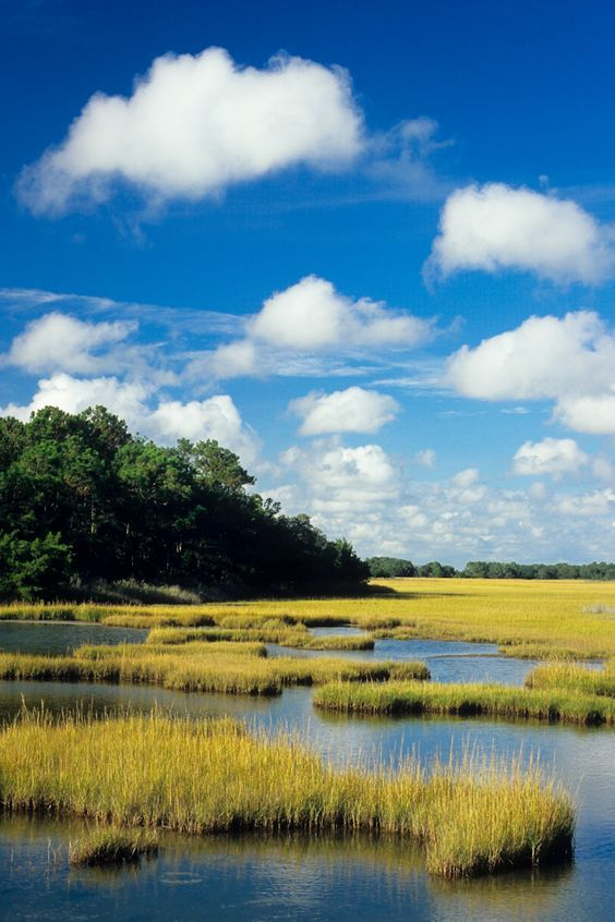 Salt Marsh In James Island South Carolina Marshes In