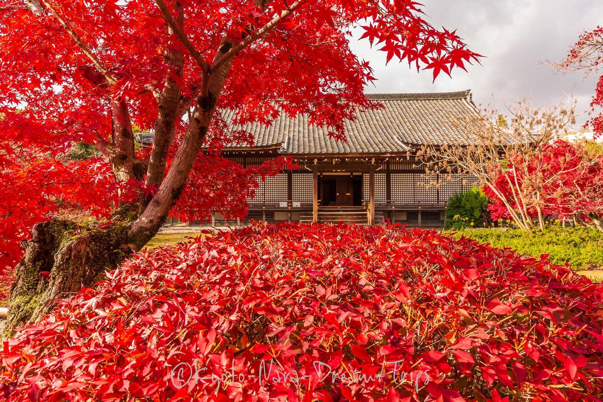 Autumn Scenery at Kaju-ji Temple, Yamashina-ku, Kyōto City-Japan. #autumnscenery Selection of pictures during the autumn season 0f 2018 in Kyoto-City. Pictured here the gardens of Kaju-ji in Yamashina. #autumnscenery
