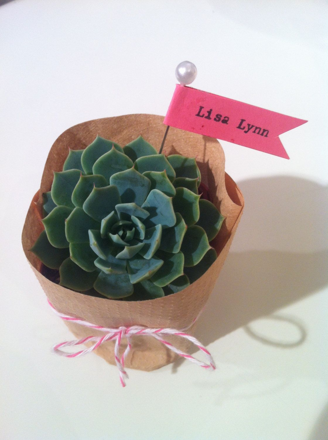THIS IS WHAT I WANT TO DO! Succulent Wedding Favor. 4.00