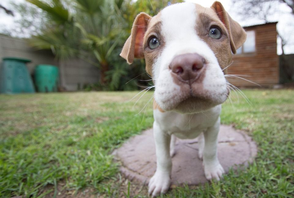 [ > A puppy was shot in the mouth and left to die in the street, allegedly by its owner. Demand jail time for the person responsible for this barbaric act.** SIGN PETITION. Link reached by clicking on Edit Pen to view.