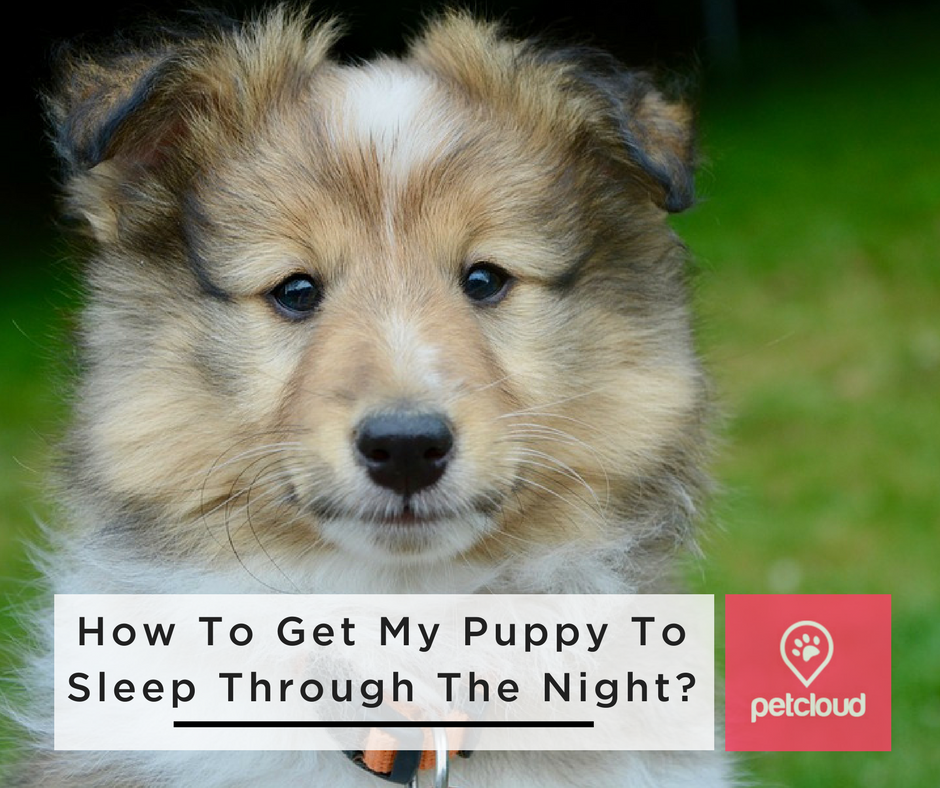 How Do I Get My Puppy To Sleep Through The Night