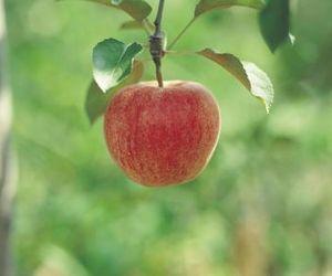 List Of Zone 6 Fruit Trees Hunker Growing Fruit Fruit Trees Backyard Fruit Tree Garden