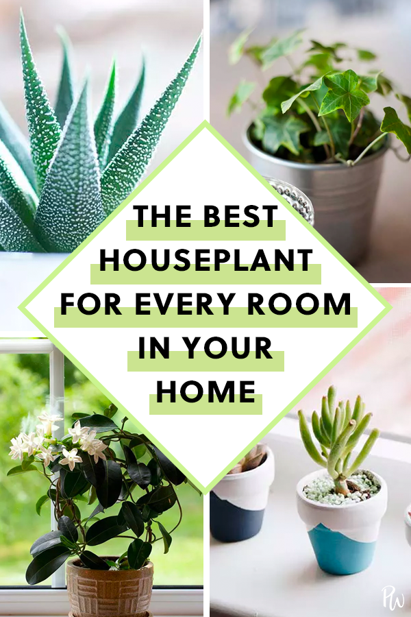 Photo of The Best Houseplant for Every Room in Your Home
