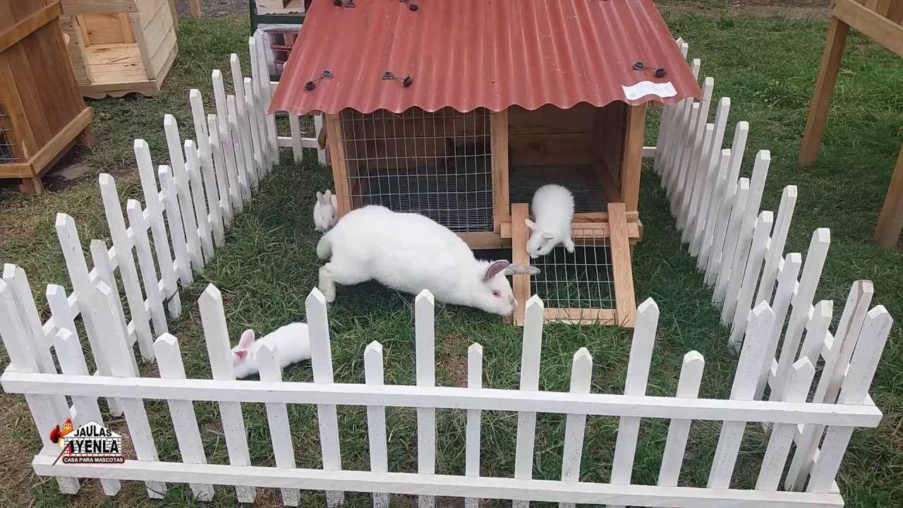 Jaula de conejo desarmable paso a paso copito - Casa conejo ...