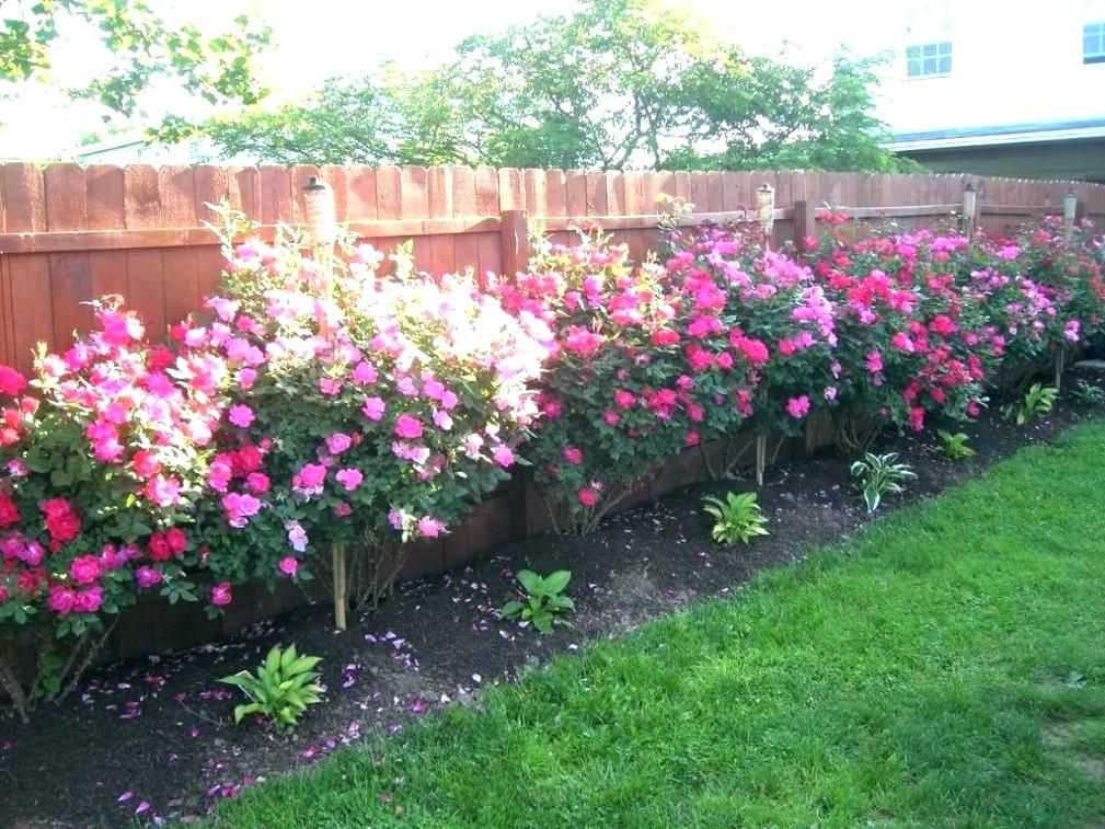 Rose Garden Ideas For Small Backyard