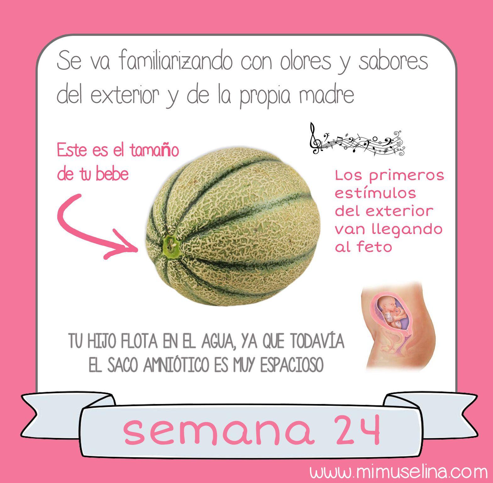 Semana 24 Jpg 1568 1536 Embarazo Etapas Del Embarazo