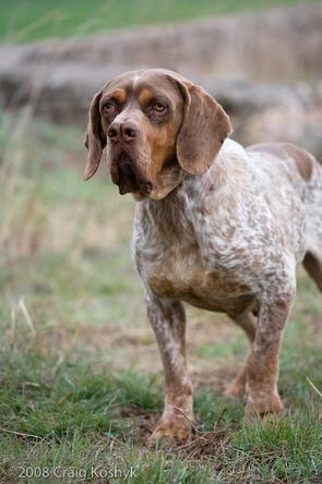 Petland Dog Grooming Prices
