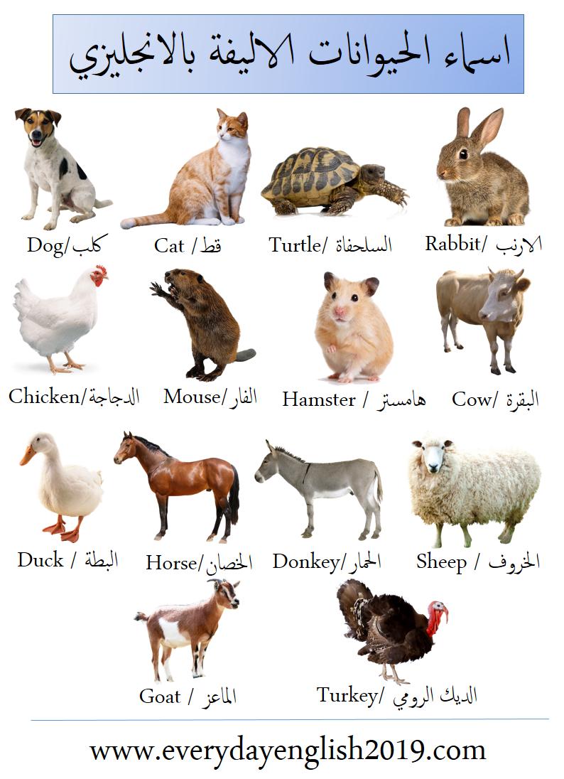 اسماء الحيوانات بالانجليزي بالصور Animals In English Animals Dogs Cats