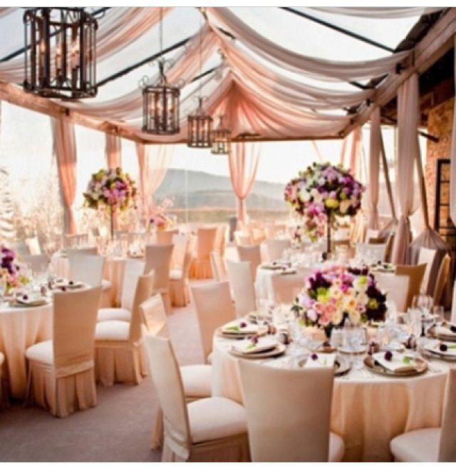 Apricot colour themed wedding decor apricot hues pinterest apricot colour themed wedding decor junglespirit Gallery