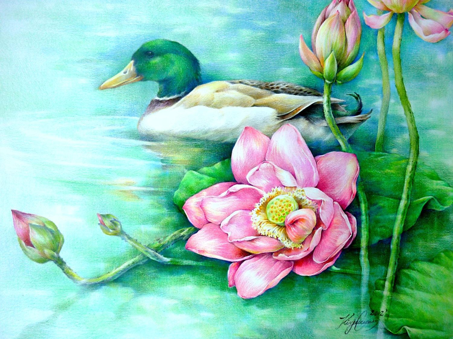 Lotus flowers and a duck origianal colored pencil paintingkim lotus flowers and a duck origianal colored pencil paintingkim izmirmasajfo