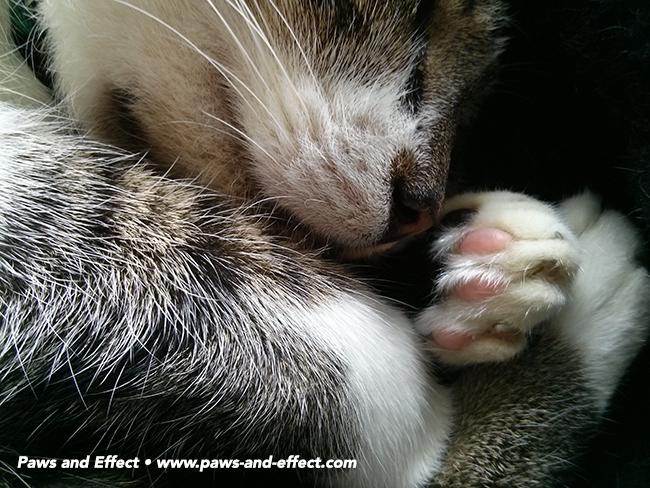 My Blind Cat Is Missing the Litter Box Cat behavior
