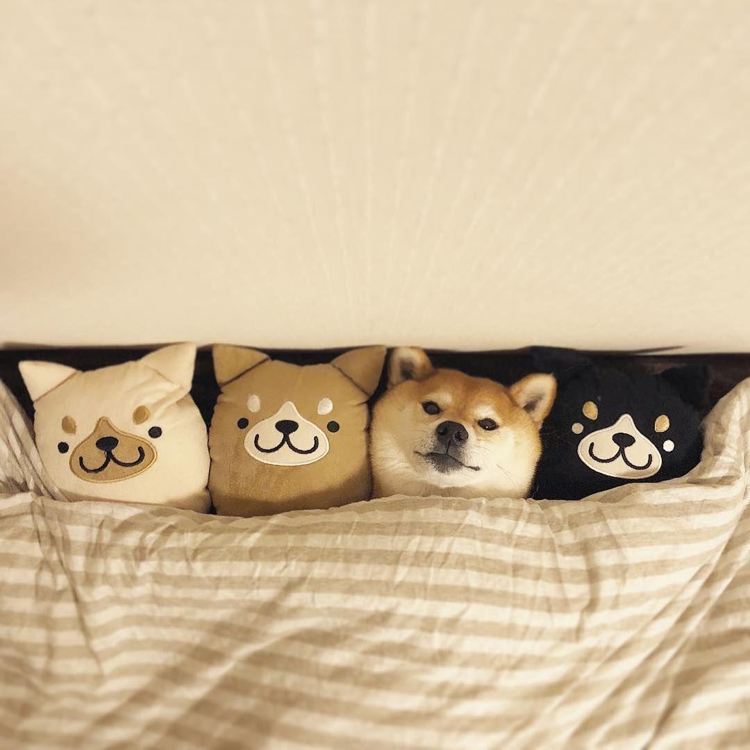 탄피 On Twitter 아유 댕댕이 어디갔지 안보여서 개껌 못주갰내 可愛い犬 かわいいペット 可愛い 動物