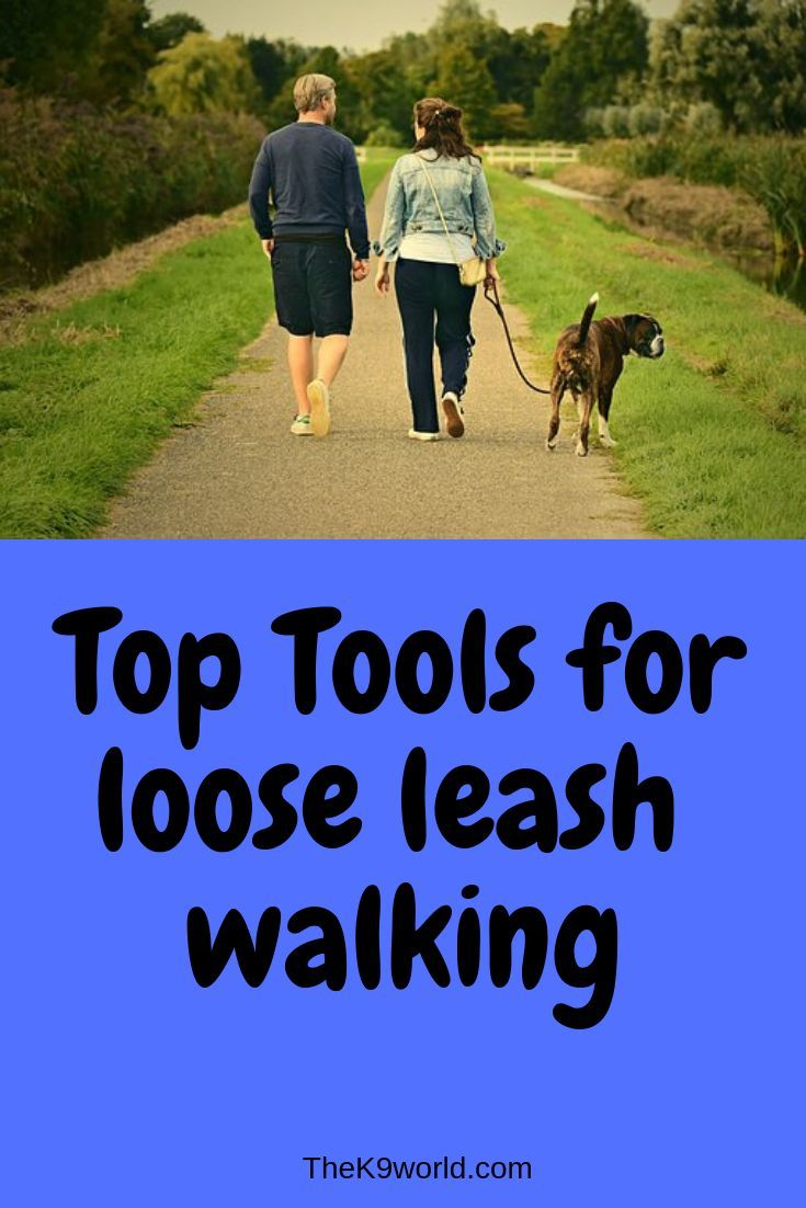 Top Tools To Train Loose Leash Walking Dog Training Dog