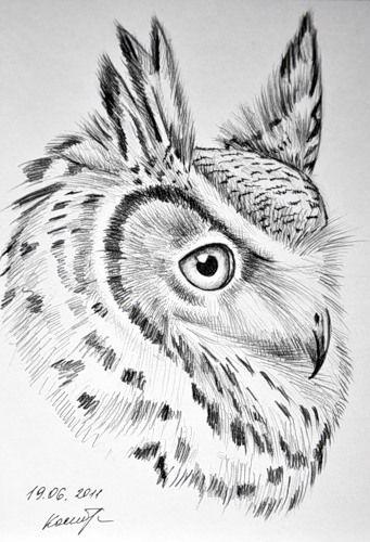 картинки рисунки сова