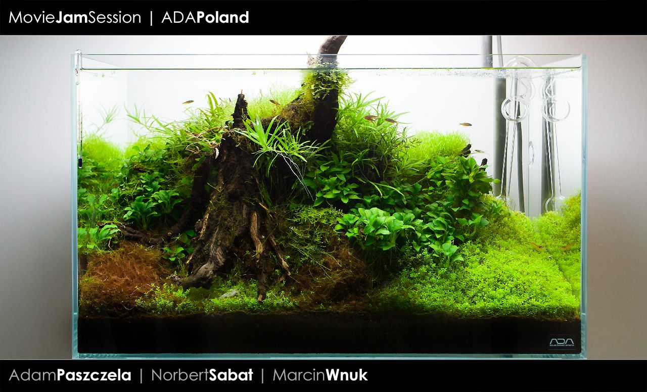 Baca akwarium pinterest aquarium relax and mini