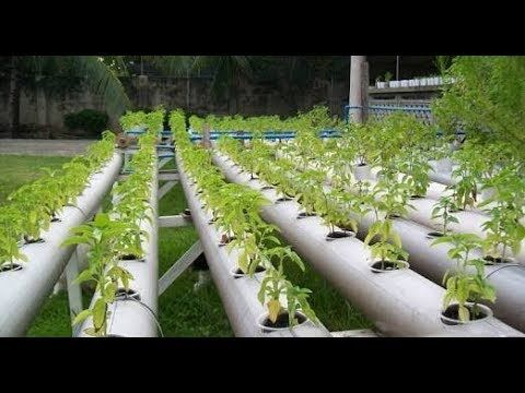 Successful hydroponics agriculture in punjabindia youtube gardens solutioingenieria Image collections