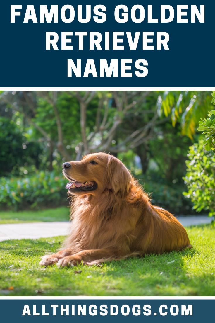 Famous Golden Retriever Names Golden Retriever Names Golden Retriever Red Golden Retriever Puppy