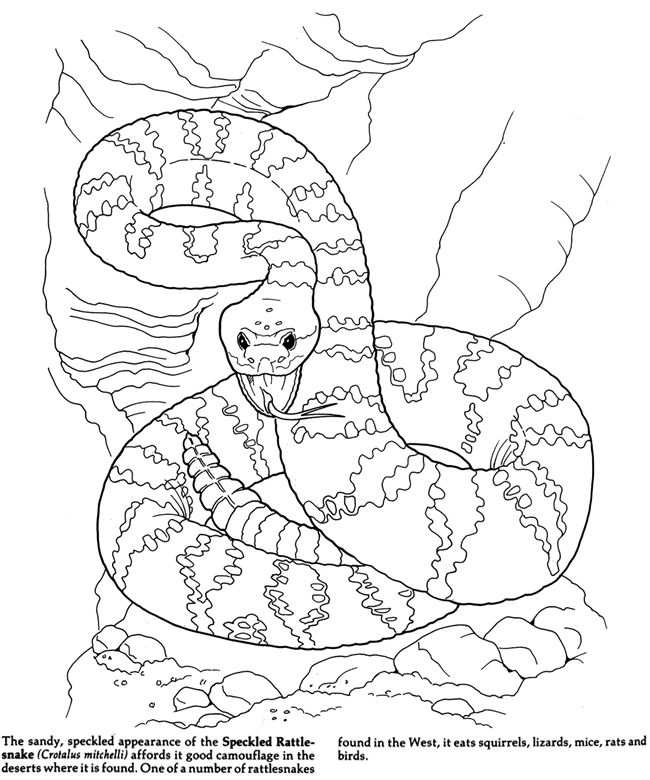 Reptiles Amphibians Coloring Pages Snake Coloring Pages Snake