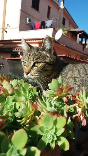 Giovanni gatto
