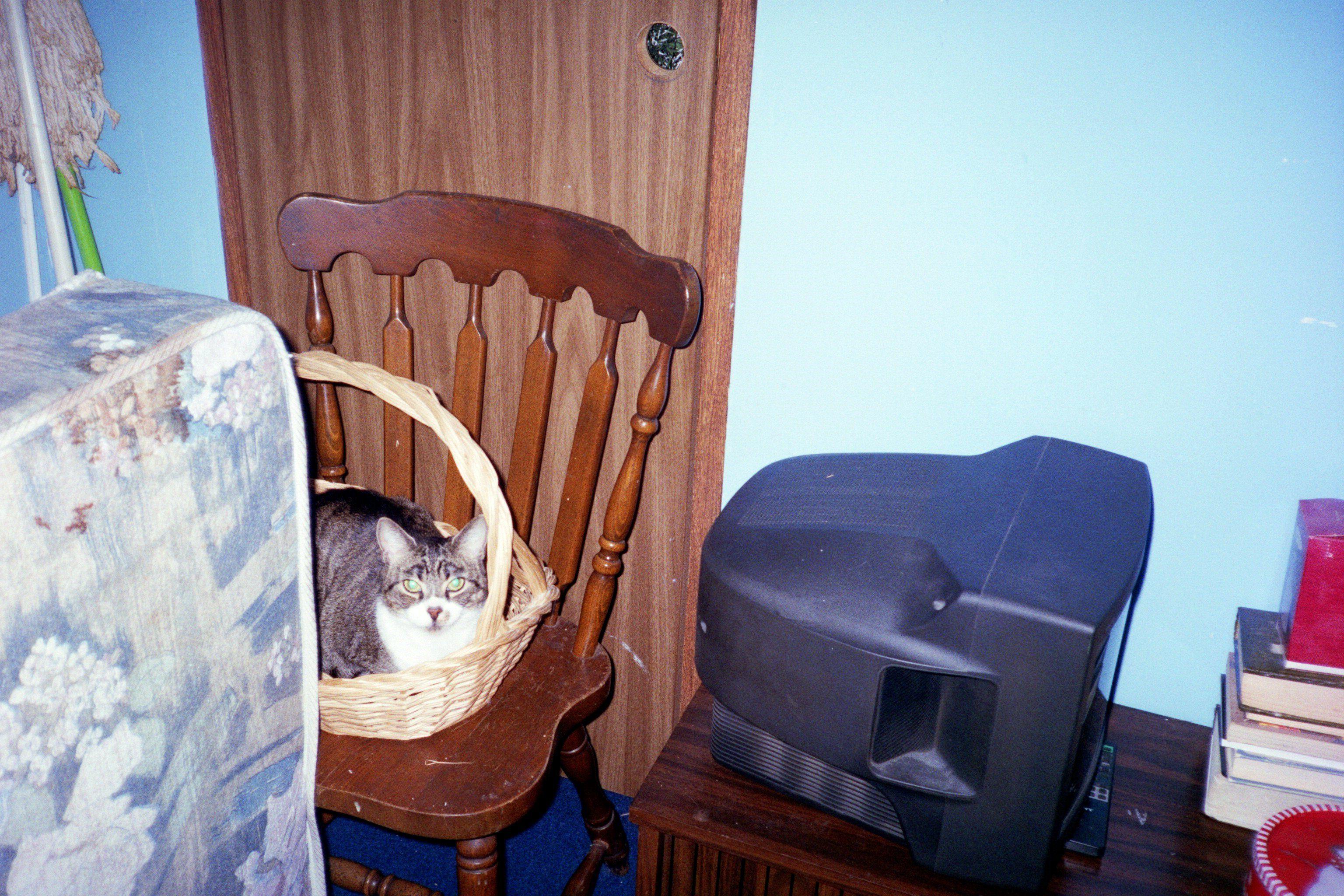 Missy in a basket!