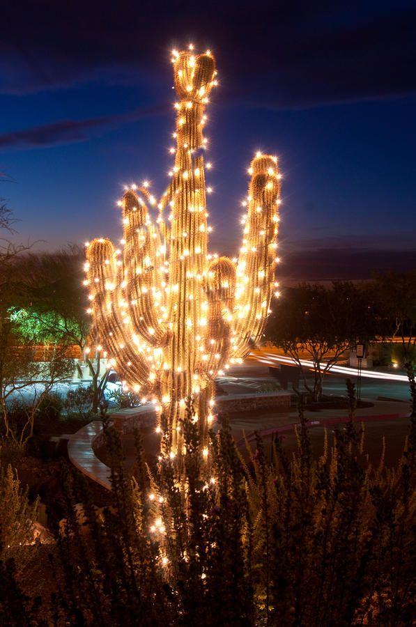 Arizona Christmas Tree by Jacek Joniec | Christmas, Christmas lights, Holiday