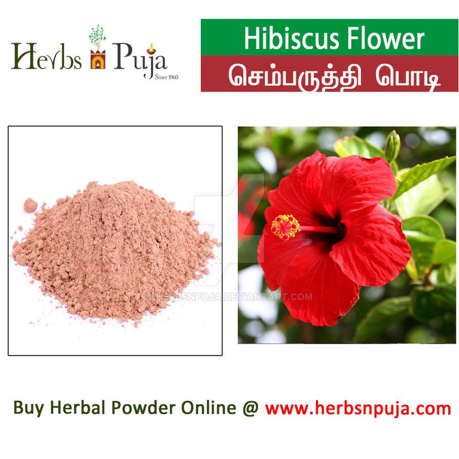 Hibiscus Flower By Herbsnpuja On Deviantart Hibiscus Flowers Hibiscus Flowers