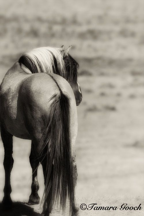 This is beautiful. There's no horse like the Mustang/Kiger Mustang. Their beauty is unmatchable!