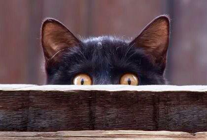 Cat sneaking a peek! | Cats, Cute cats, Crazy cats