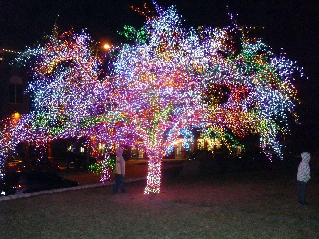 Weird Christmas Trees Strange Christmas Lighting Displays Amazing Tree Covered With Christmas Lights Christmas Light Hangers Outdoor Christmas