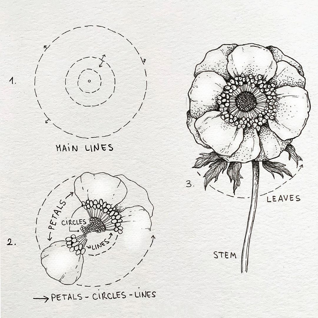 Alice On Instagram Anemone And Today You Can Practice Drawing This Anemone Swipe To See Othe Flower Drawing Flower Drawing Tutorials Floral Drawing