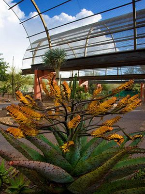 Landscaping Ideas from the Desert Botanical Garden